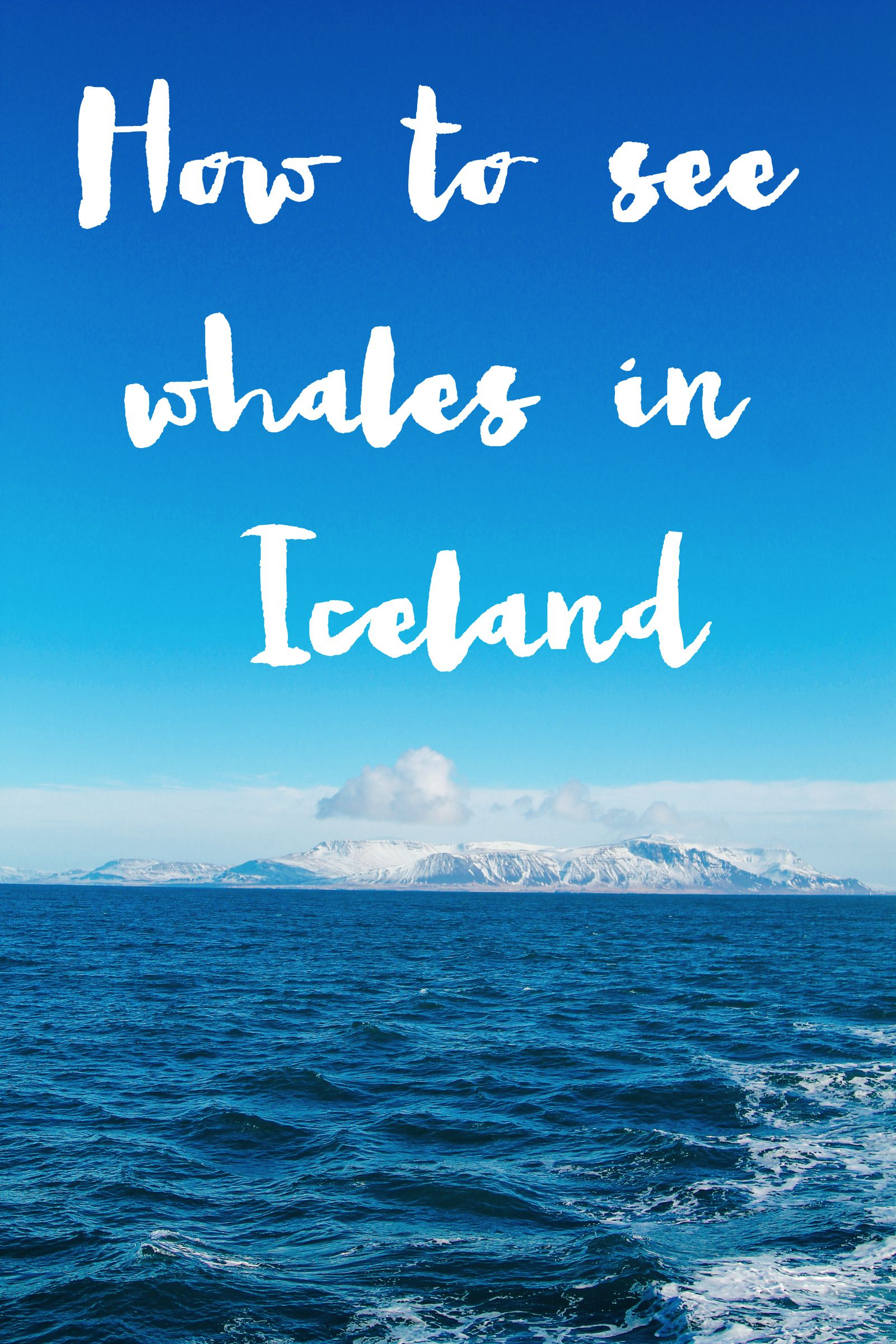 Here Is How To See Whales (And Dolphins) In Iceland! Whale watching in Reykjavik (38) (1)