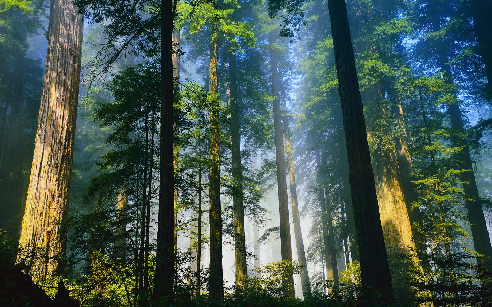12 Of The Best Hiking Routes You Have To Experience In California (5)