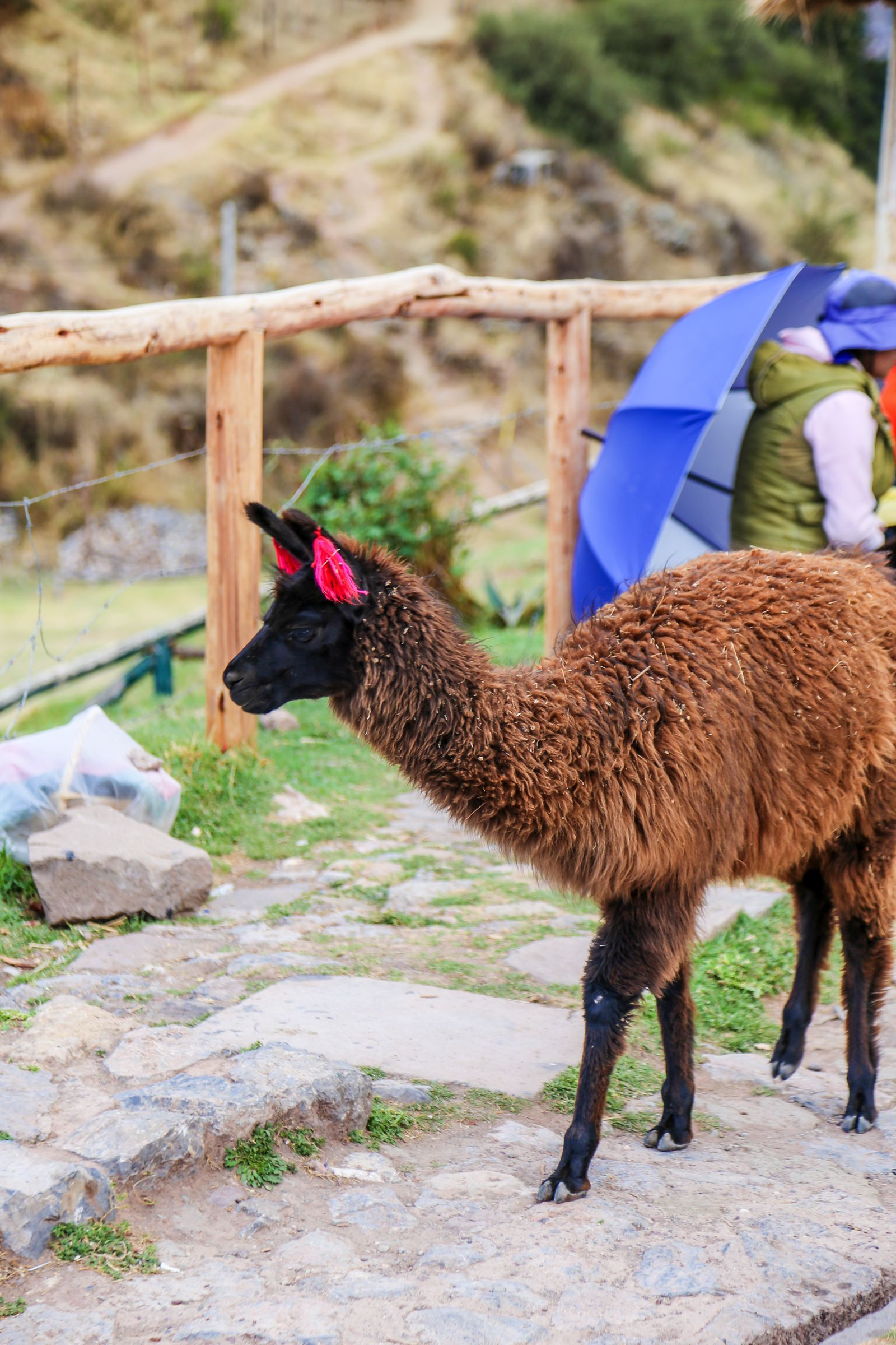 4 Amazing Ancient Inca Sights To See In Cusco And The Sacred Valley of the Incas (84)