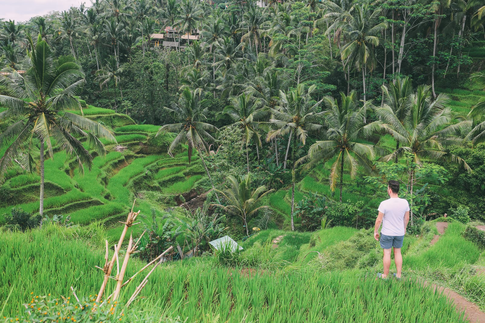 Bali Travel - Tegalalang Rice Terrace In Ubud And Gunung Kawi Temple (11)