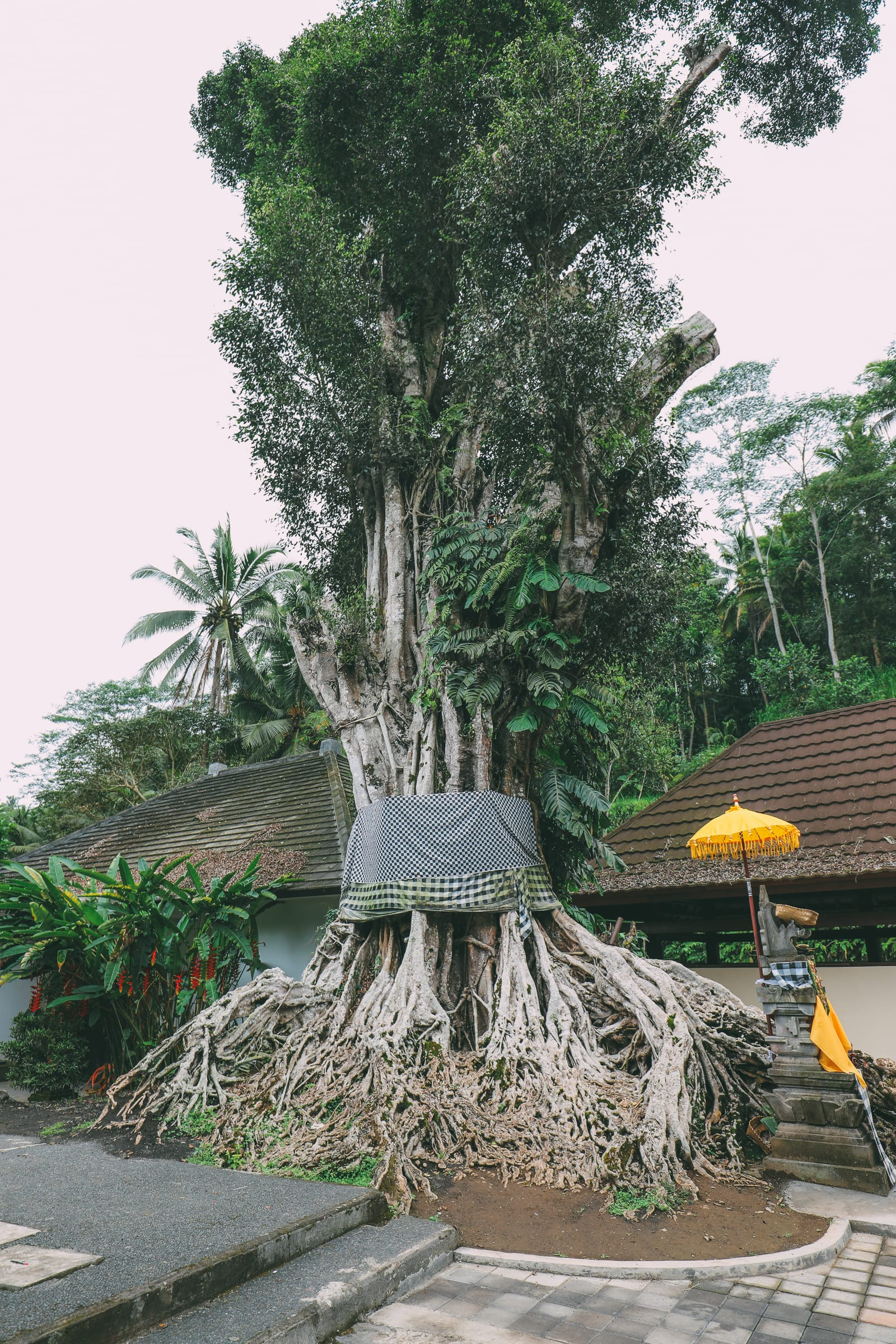 Finding A Secret Waterfall in Bali, Tirta Empul Temple And Mount Batur Volcano (25)
