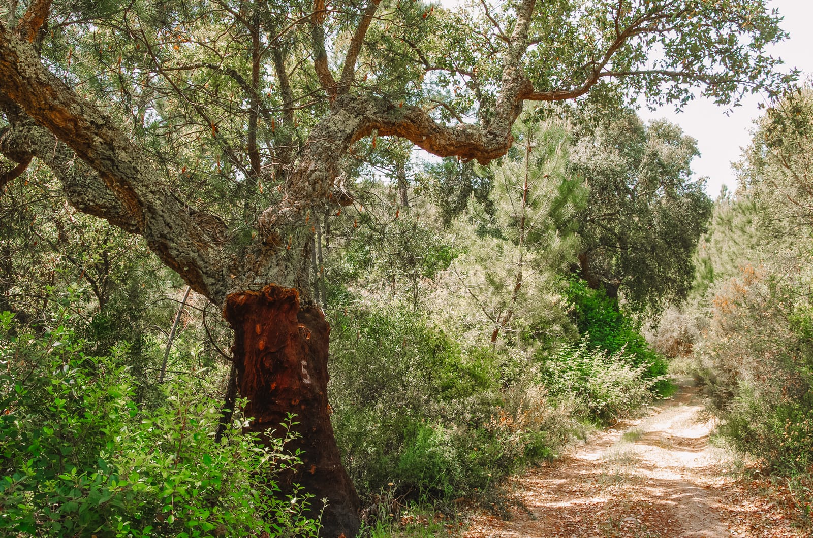 The 11 Best Hikes In Portugal You Have To Experience (6)