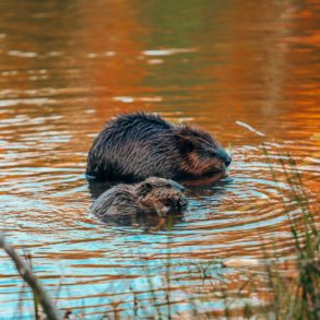 Getting Lost In Nature (And With Beavers) In Quebec, Canada (11)