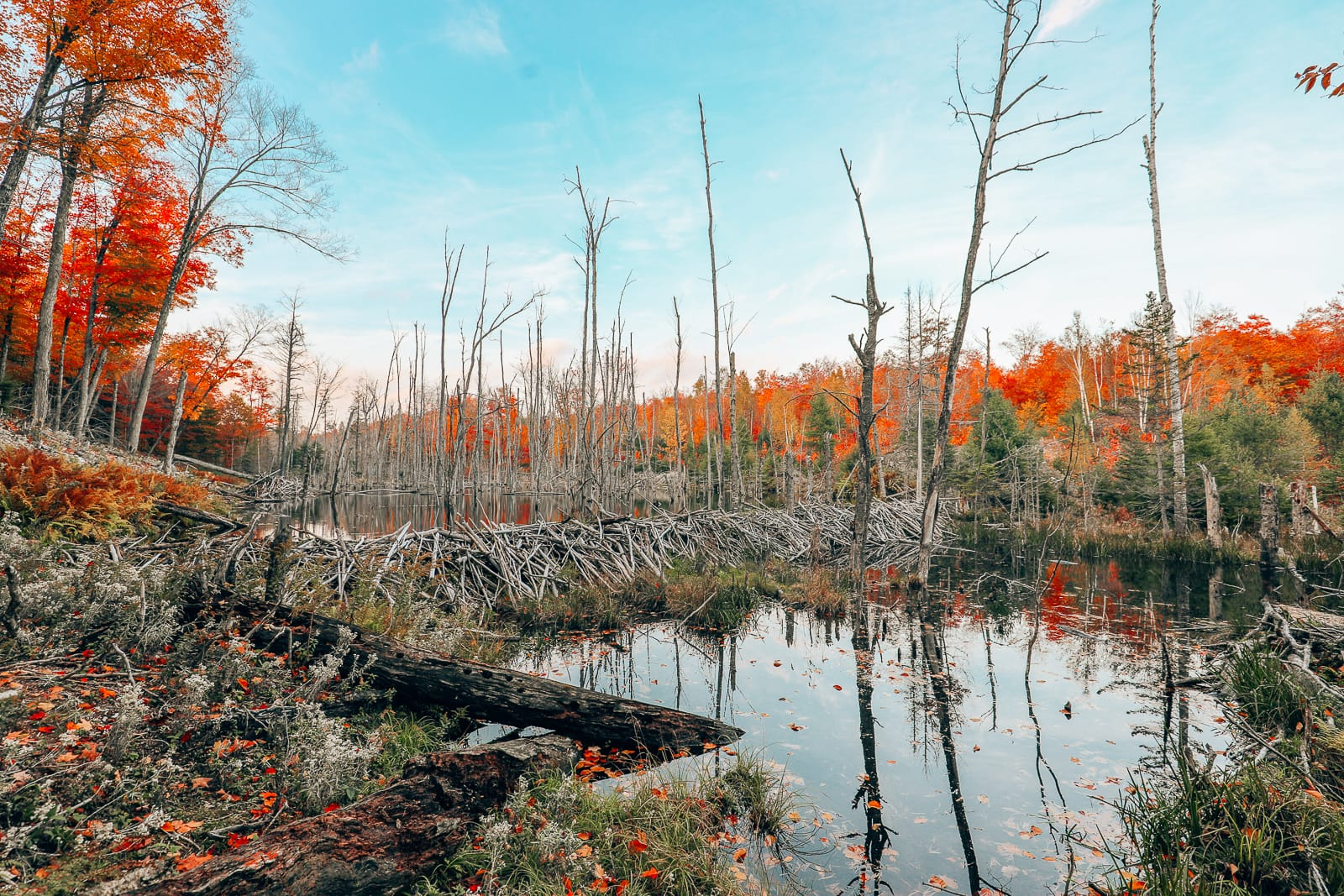 Getting Lost In Nature (And With Beavers) In Quebec, Canada (16)