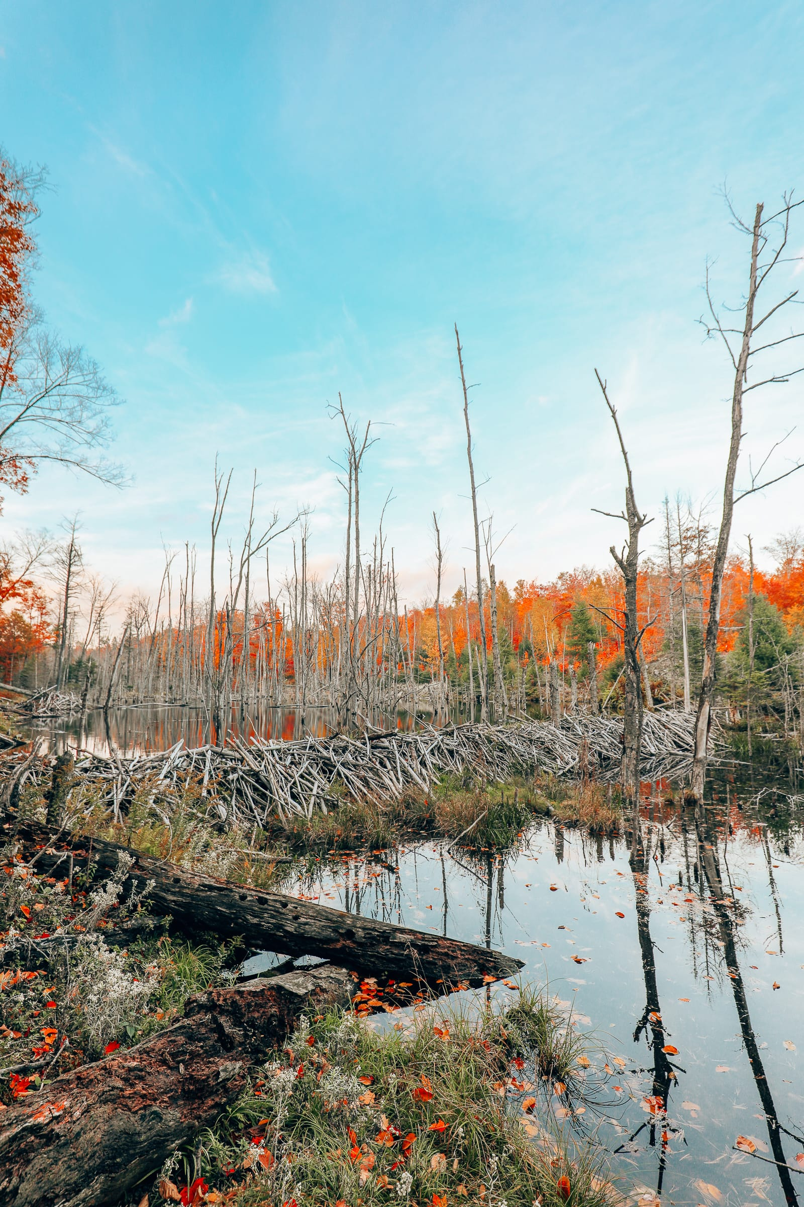 Getting Lost In Nature (And With Beavers) In Quebec, Canada (17)