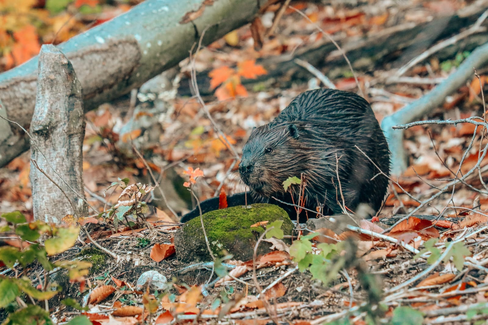 Getting Lost In Nature (And With Beavers) In Quebec, Canada (24)